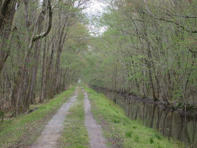 Great Dismal Swamp-Washington Ditch Rd (27)