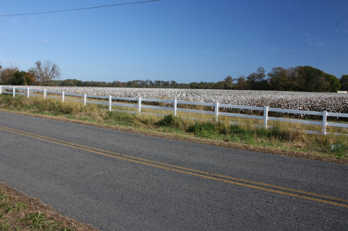 Capeville-cotton fields