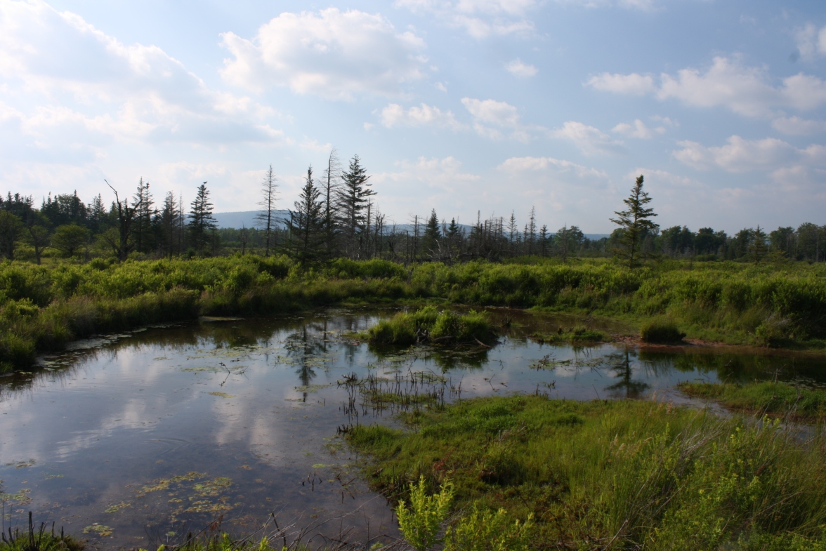 Canaan Valley NWR (5)