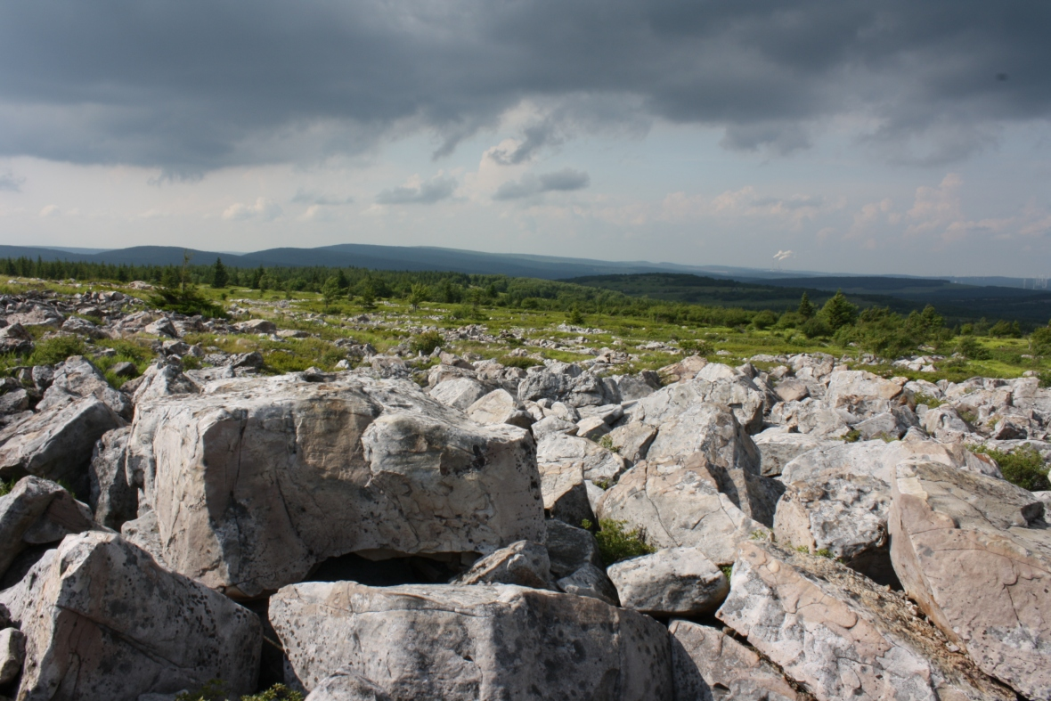 Dolly Sods NWA (85)