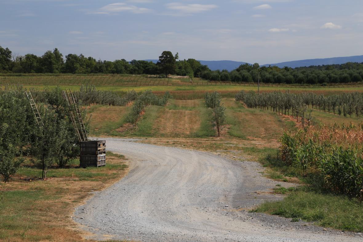 Woodbine Farm (36)