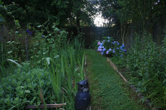 Garden-Jun 19 (19)